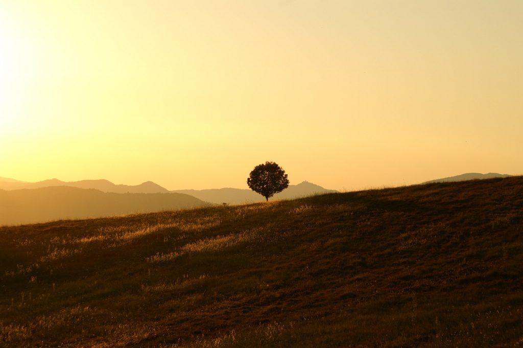 tree, meadow, sunset